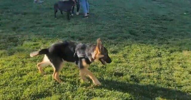 prima volta al parco per cani