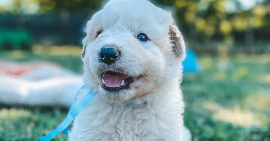 cane dagli occhi azzurri