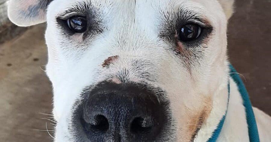 cane che guarda il volontario