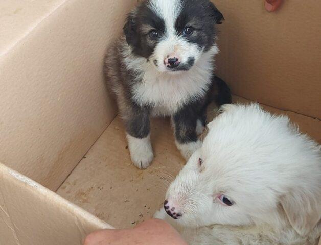 cuccioli dentro una scatola