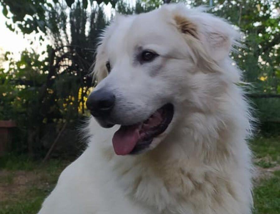 cane bianco in giardino
