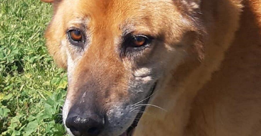 cane dagli occhi marroni