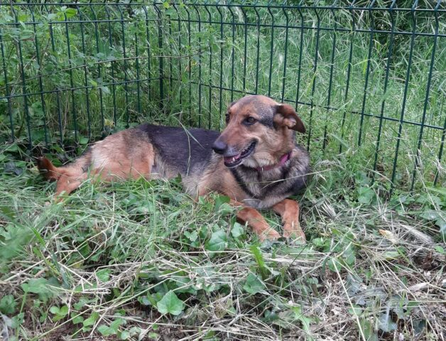cagnolina sdraiata in giardino