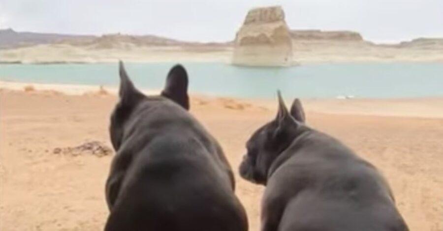 Bulldog di spalle