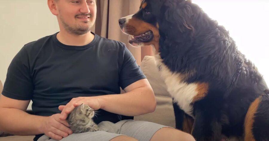 Bovaro del Bernese con il padrone e un gattino
