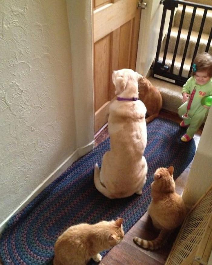 cuccioli che aspettano alla porta