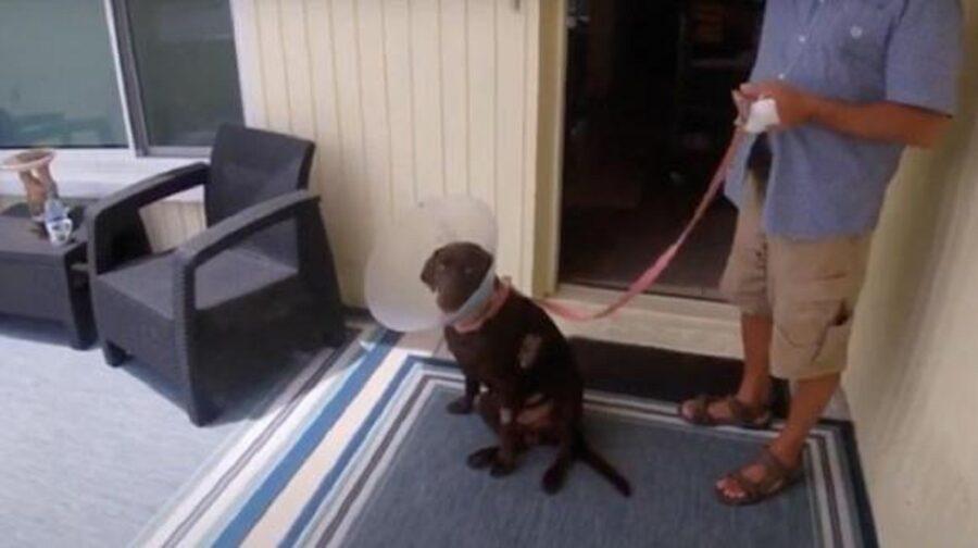 cane salvato dal proprietario