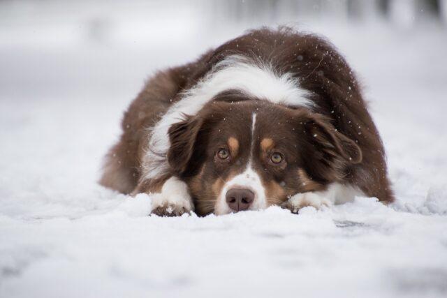 cane triste nella neve