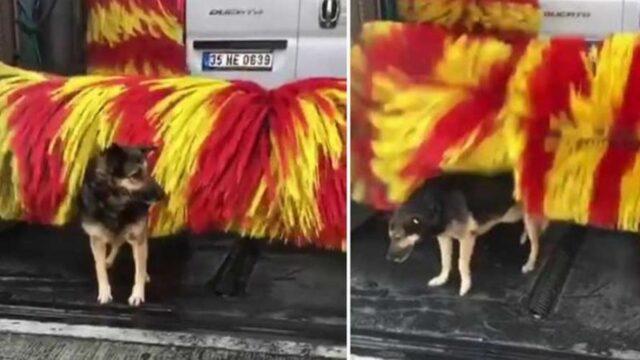 Il cane Linda che si spazzola al car wash