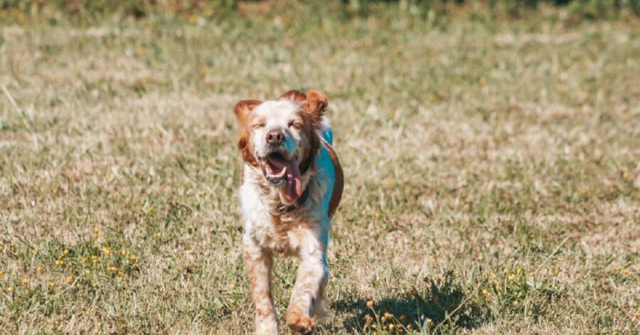 cagnolina che corre