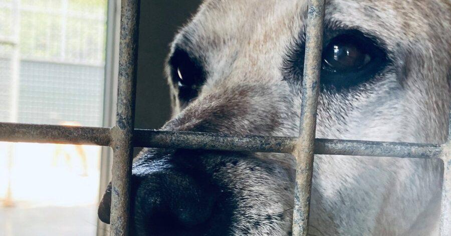 cagnolina in gabbia
