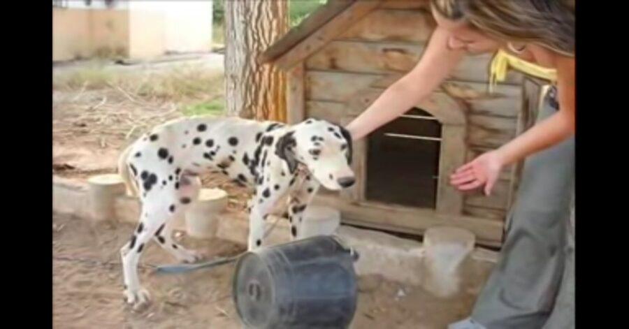 cane legato alla catena salvato
