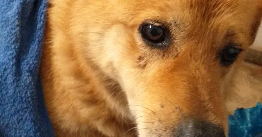 cane dagli occhi grandi