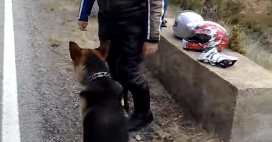 Cane perduto salvato dai motociclisti
