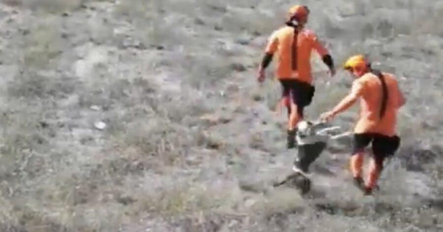 cane salvato gioca con i pompieri