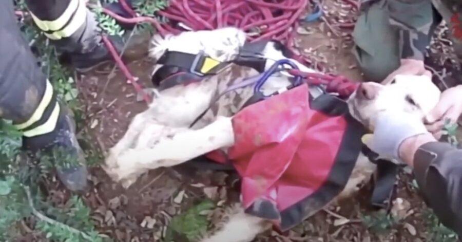 cane salvato dai pompieri dopo essere caduto in una buca