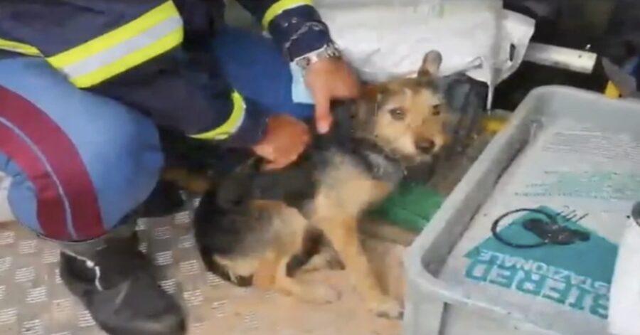 cane salvato dai poliziotti e restituito ai proprietari