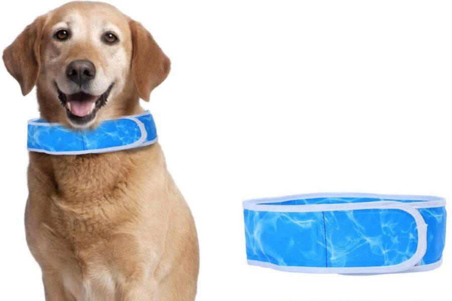 collare rinfrescante per il cane