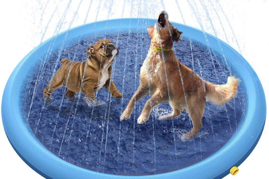 piscina per il cane