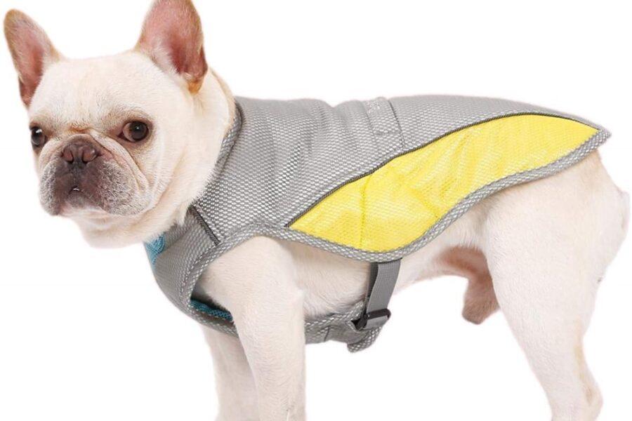 vestitino rinfrescante per cane