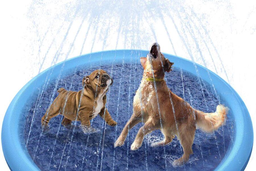 piscina per cani con getto d'acqua
