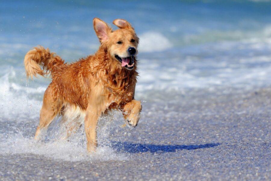 cane corre nell'acqua del mare