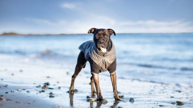 cane al mare di inverno