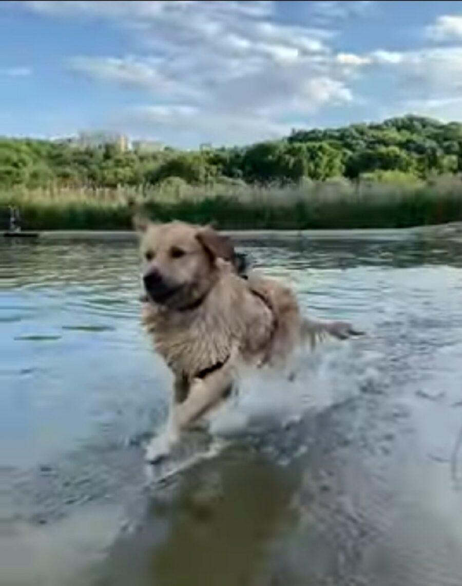 leo corre felice in acqua