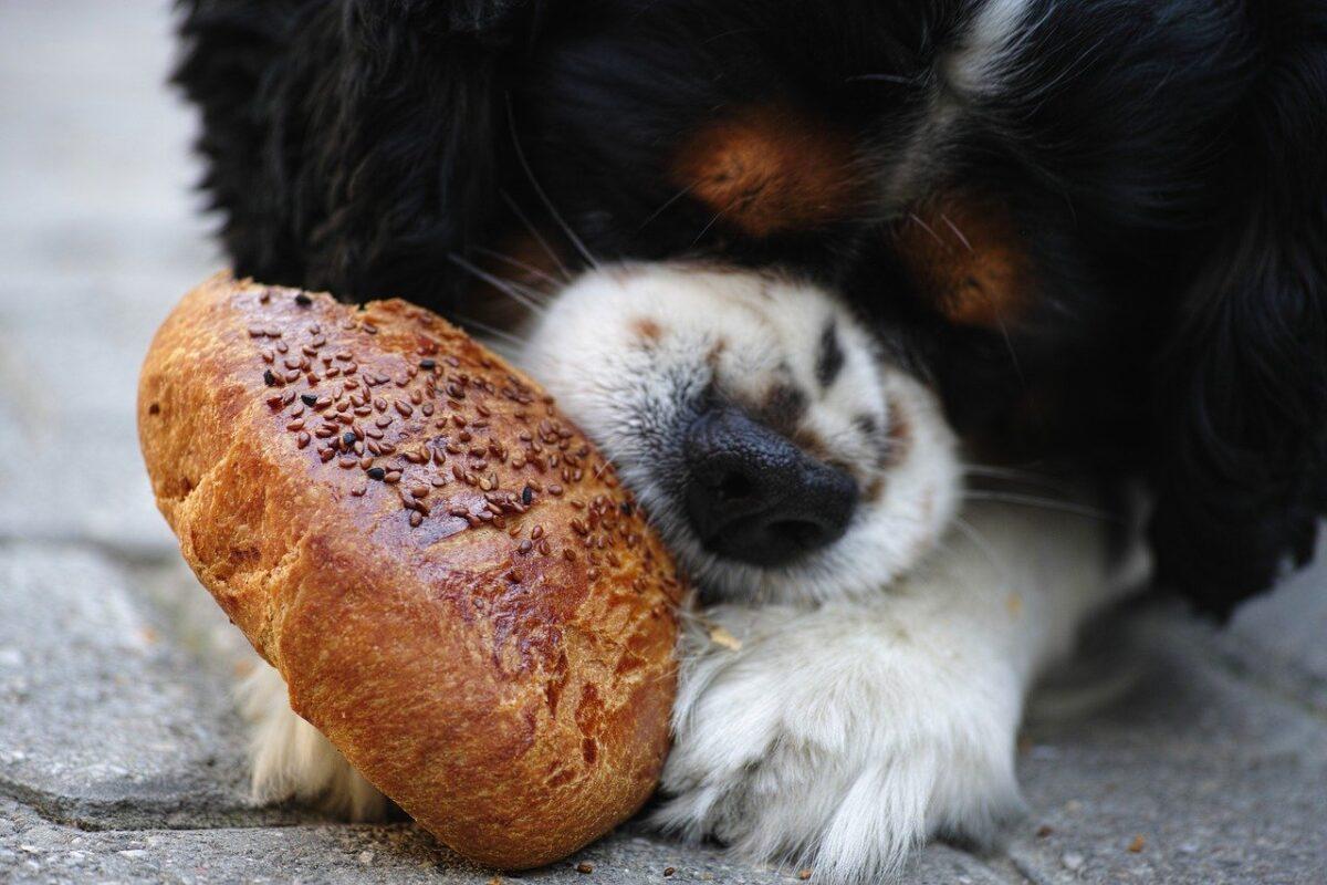 cane mangia un panino