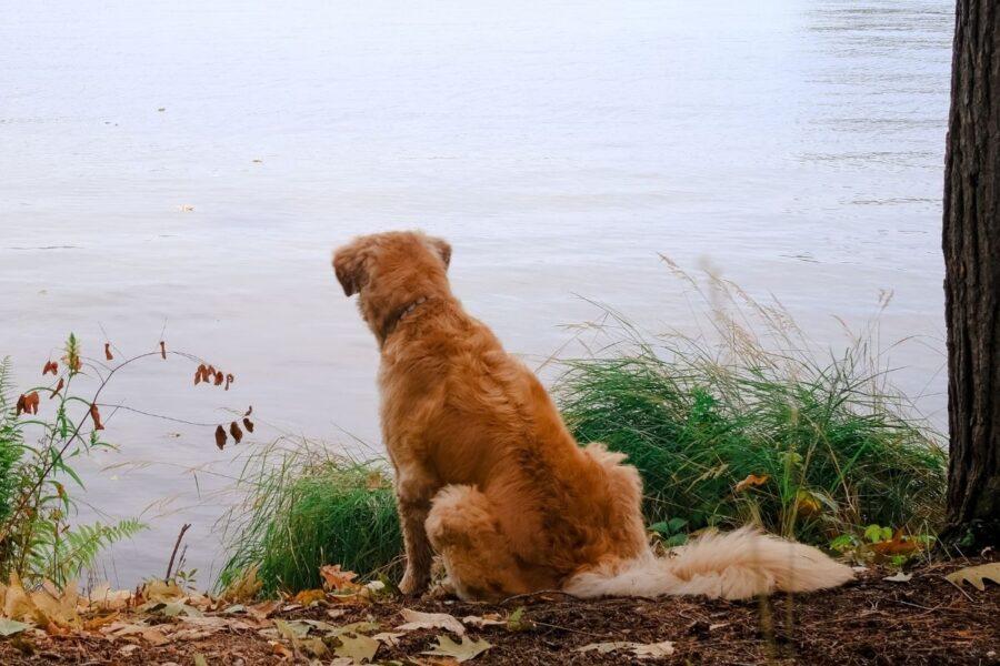 Cane che guarda verso un lago