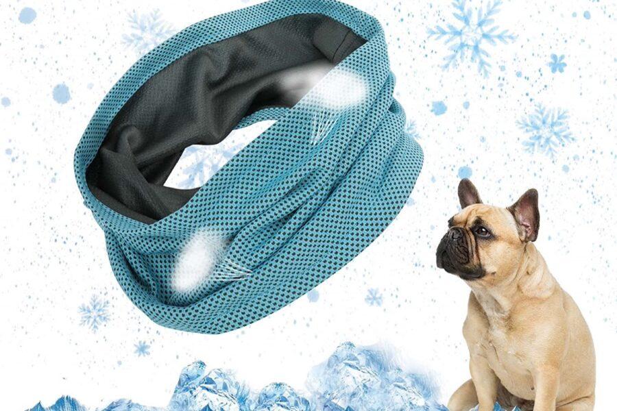 collare refrigerante per cani
