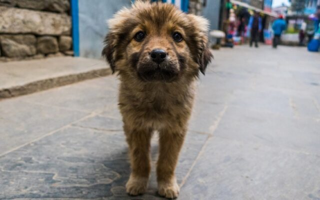 ragazzo gestisce rifugio cani animali