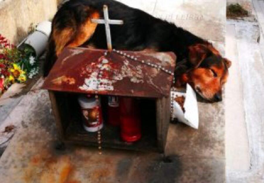 cane marrone e nero lapide