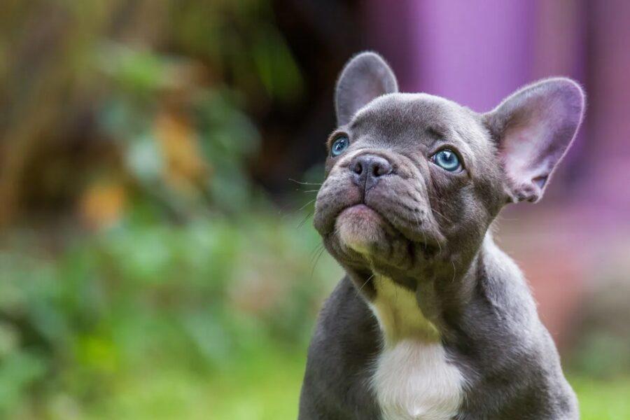 cane guarda in alto