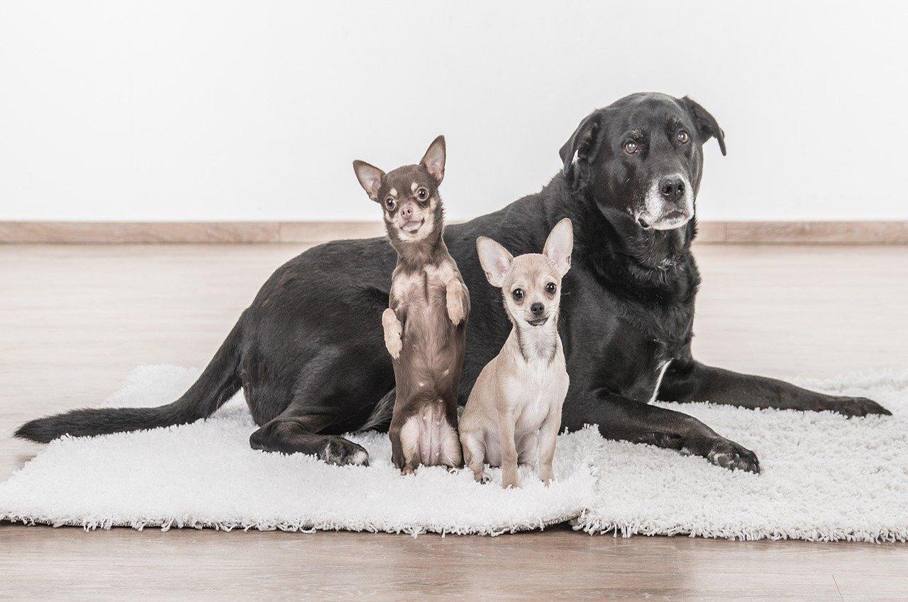 mamma-cane con i cucciolini