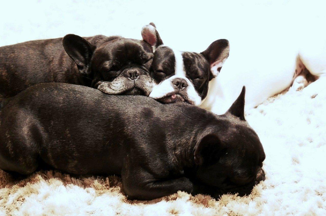 cagnolini hanno sonno