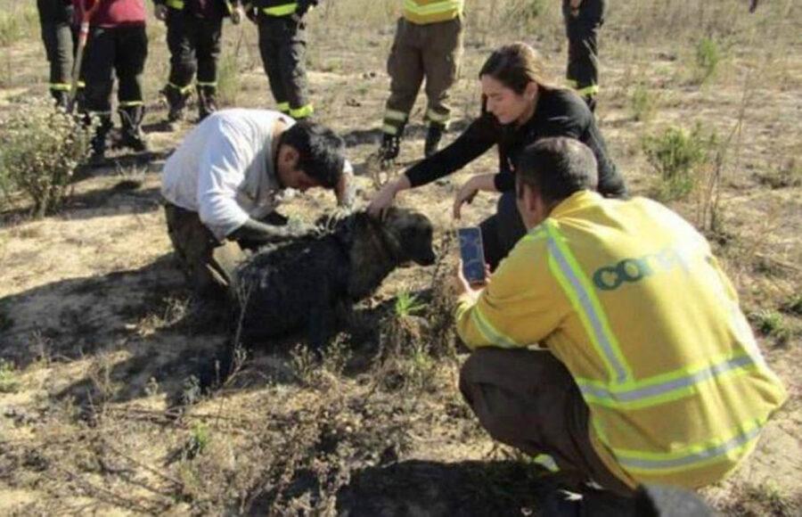 Soccorso cane ferito
