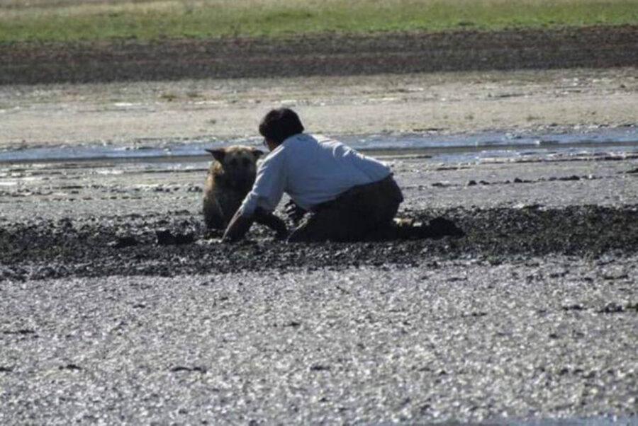 Uomo salva cane intrappolato