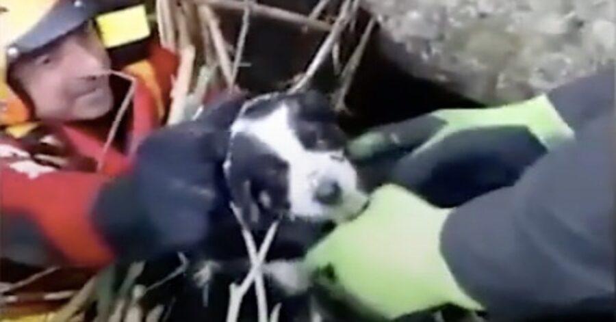pompieri salvano un cane in pericolo