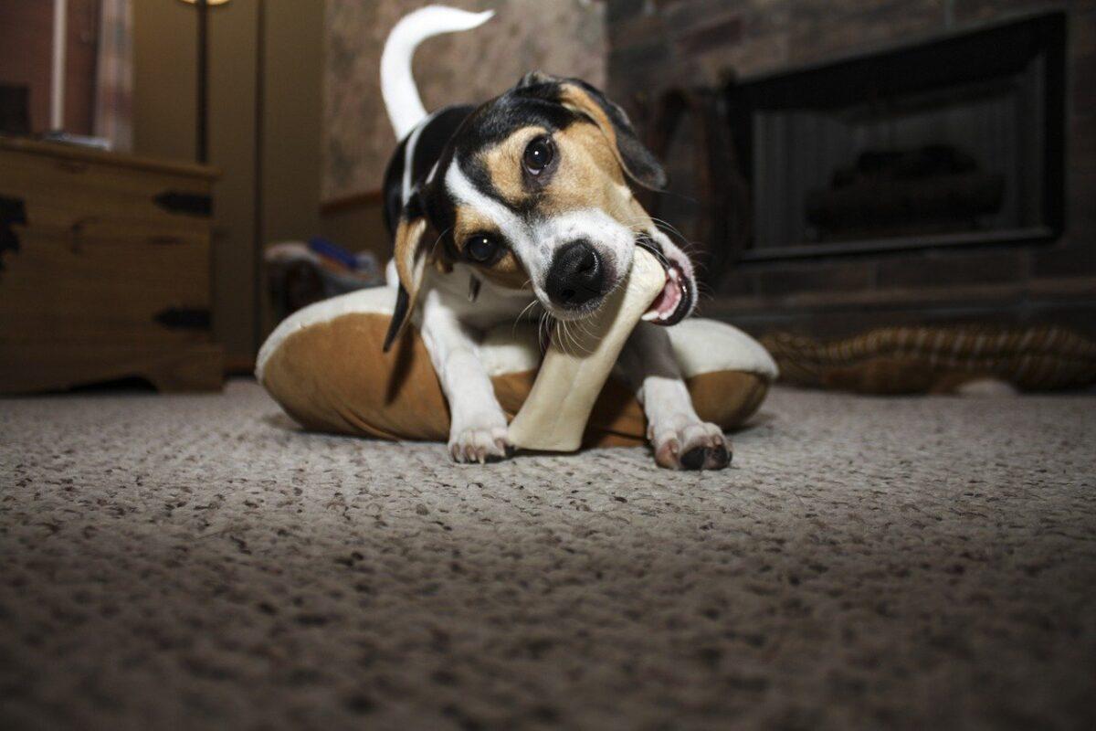 cane e osso