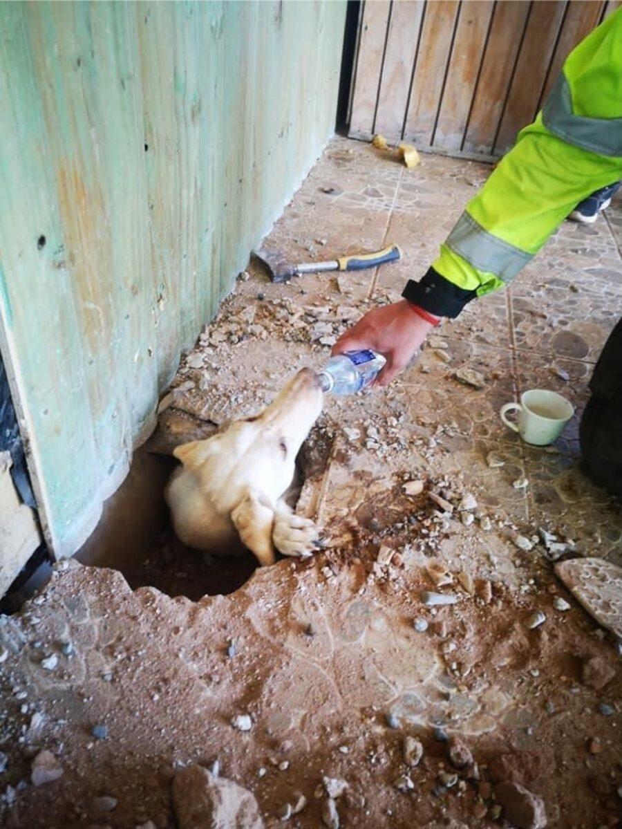 cane salvato da pompieri