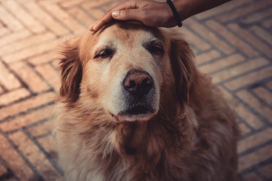 carezze al cane