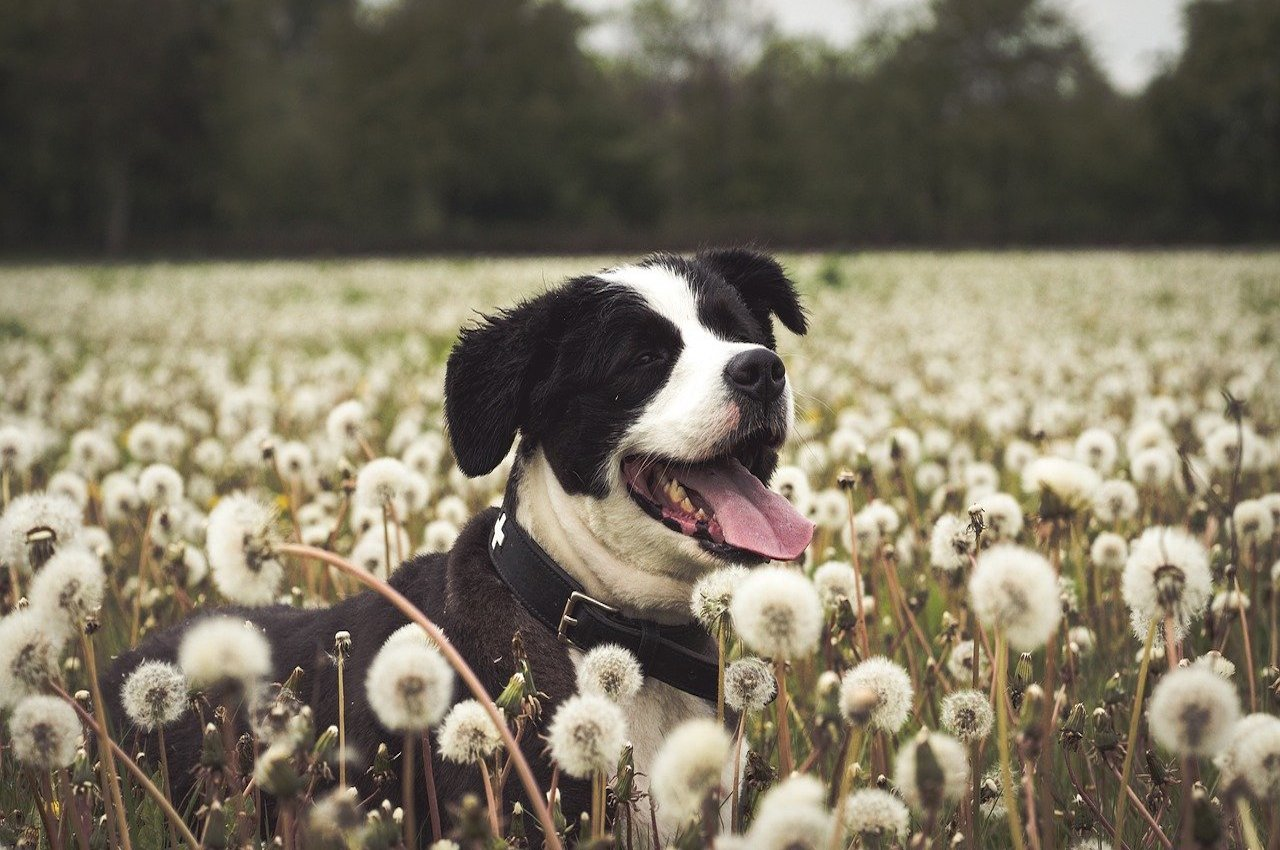 cane fra i fiori