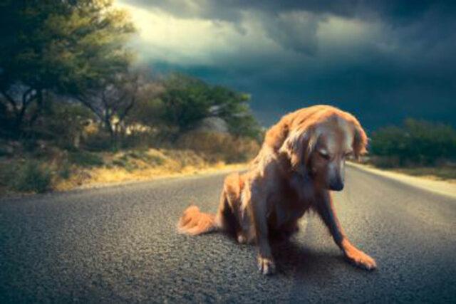 cane sulla strada
