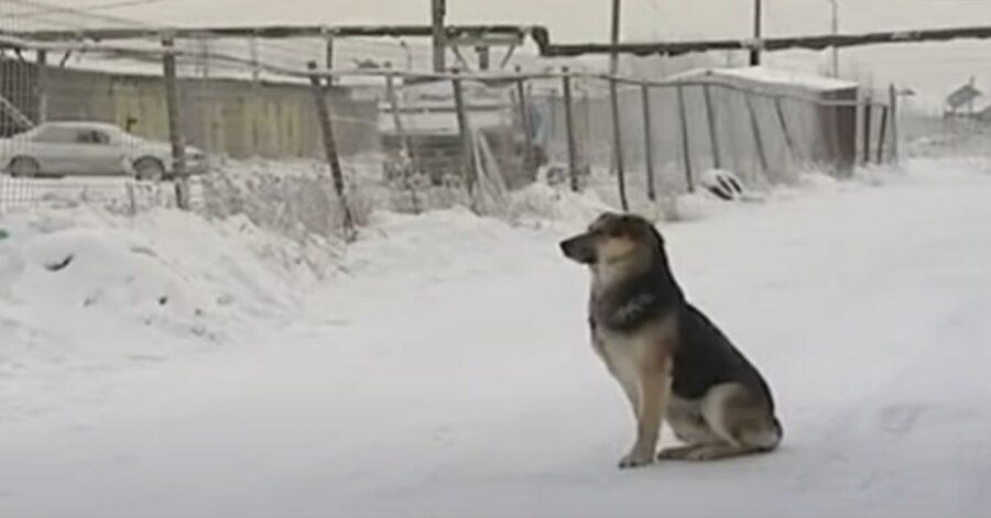 Cane seduto sulla neve