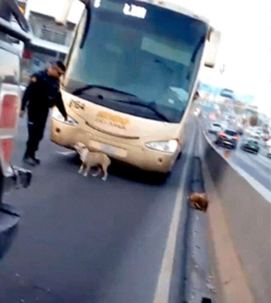 poliziotto salva cane dalla strada