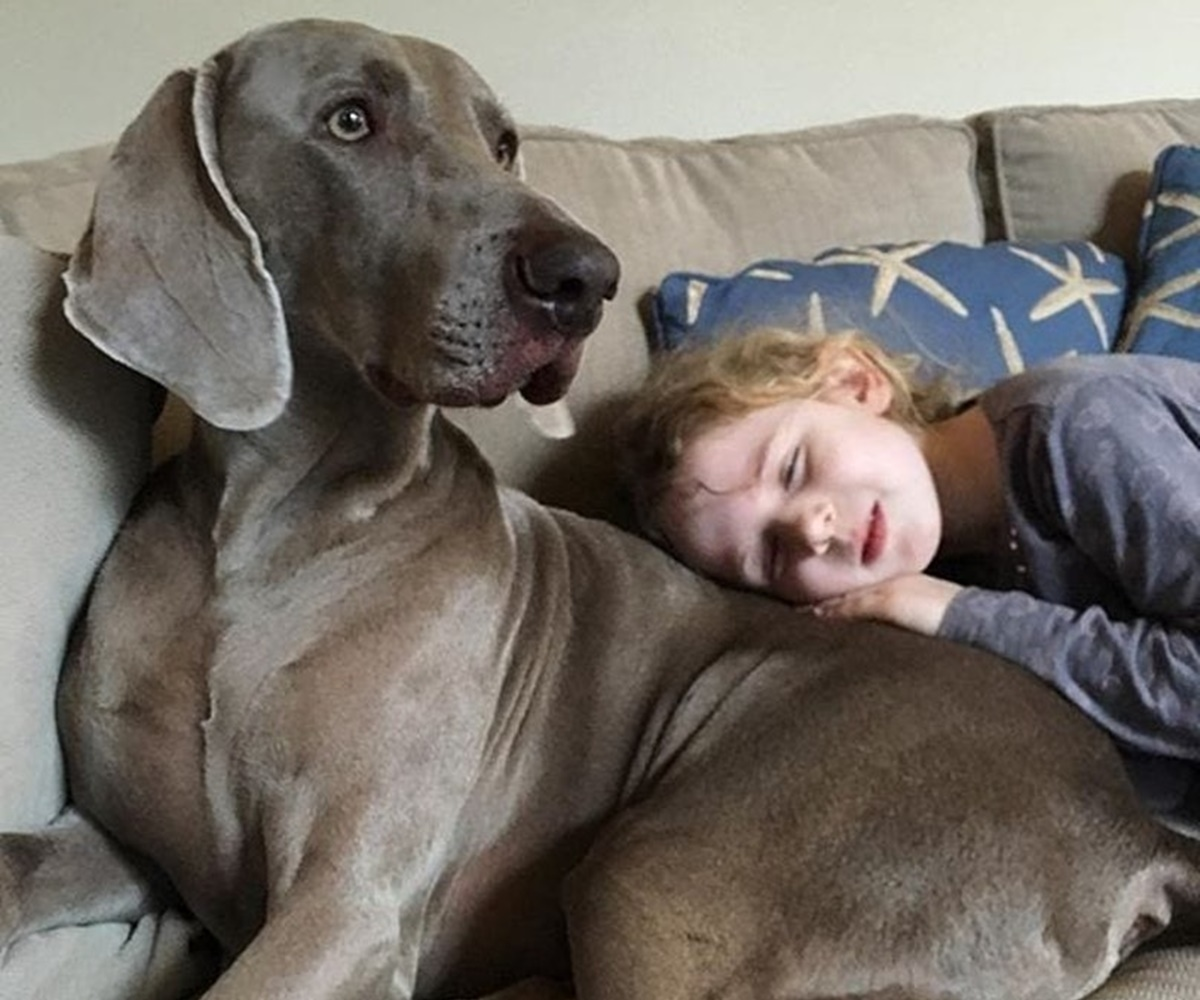 cane veglia bambino