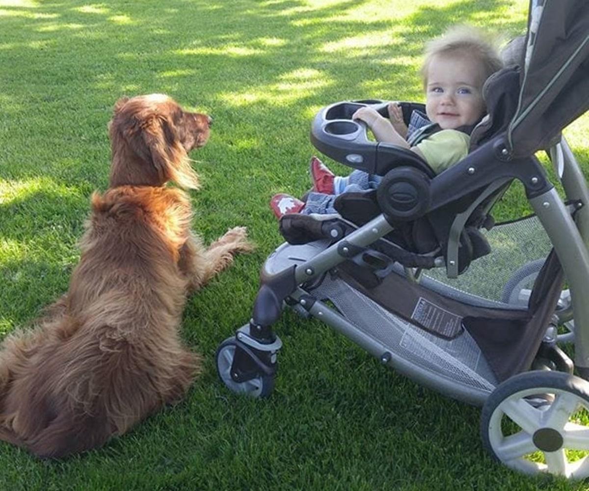 cane parco bambino
