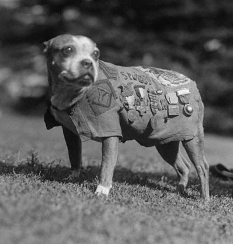 cane soldato medaglie