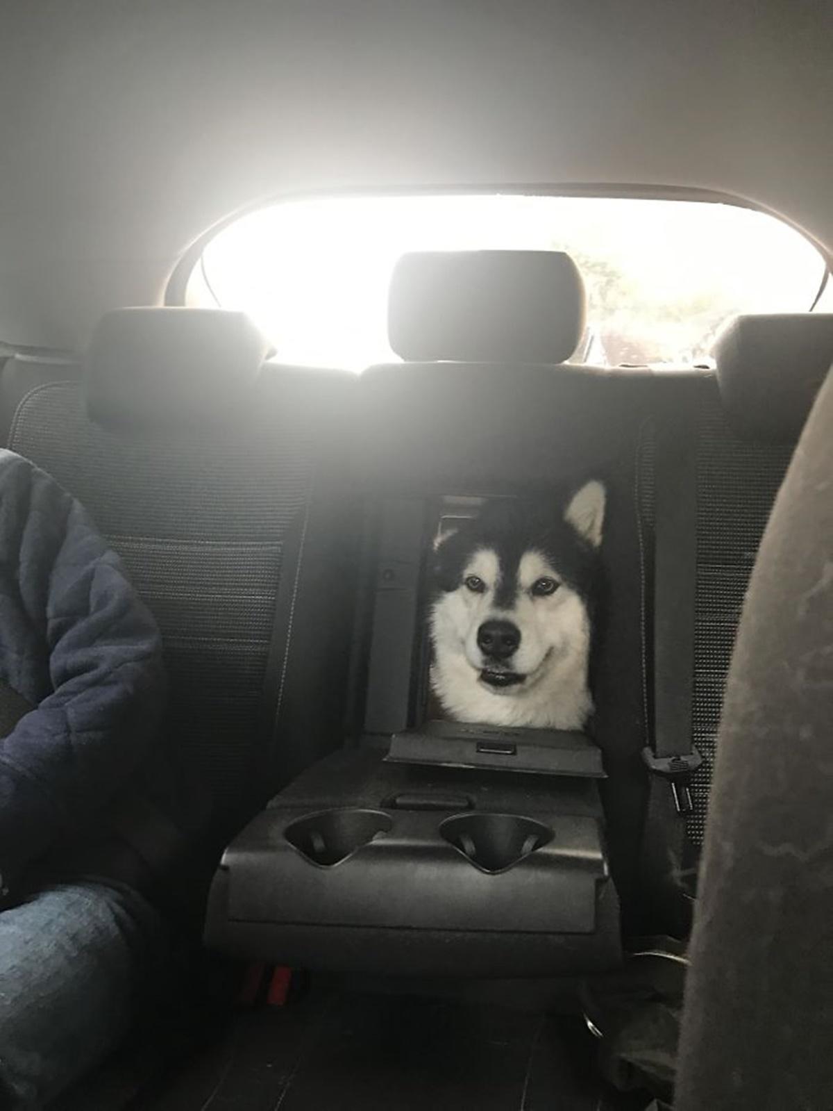 cane sedile dietro
